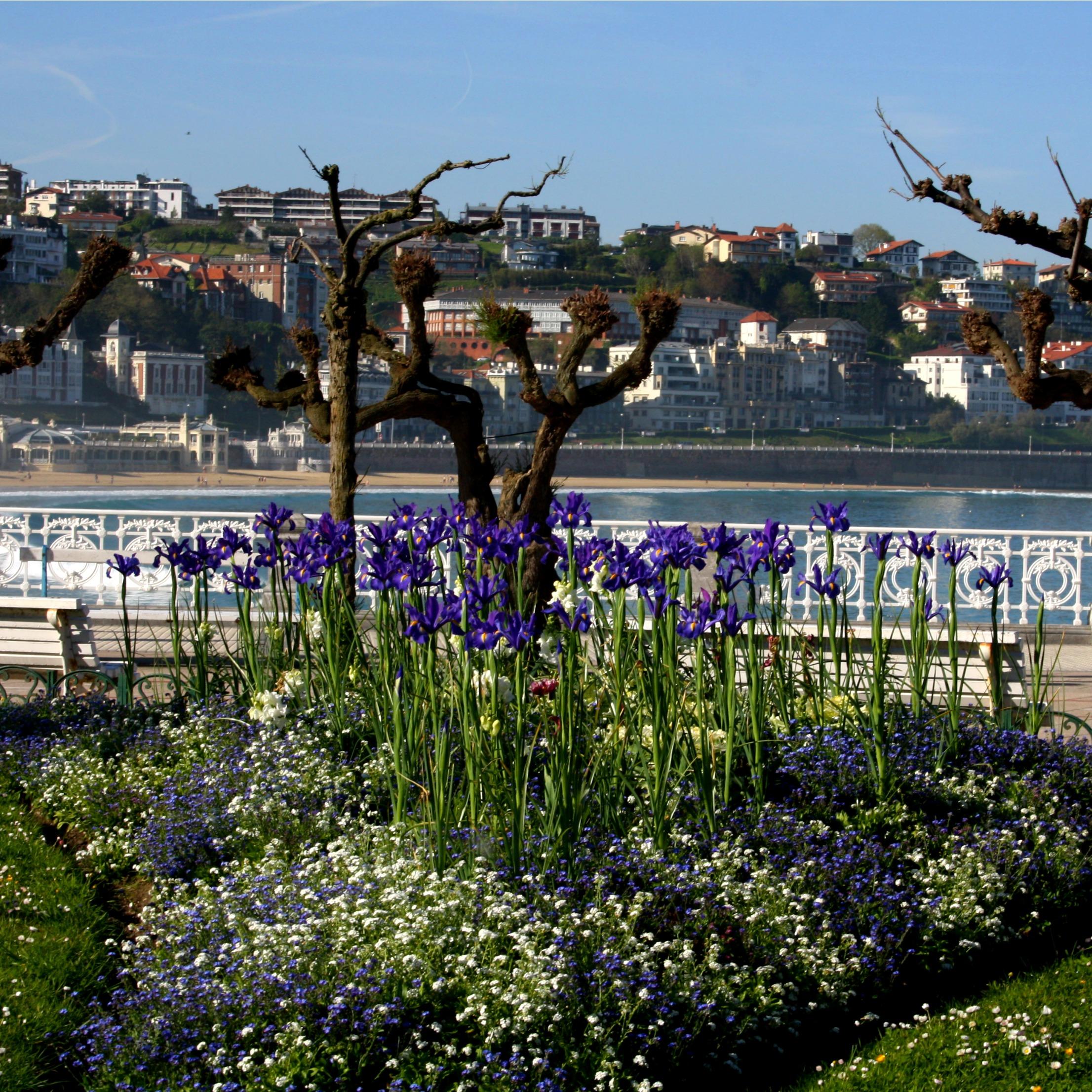 flowers in a san sebastian park