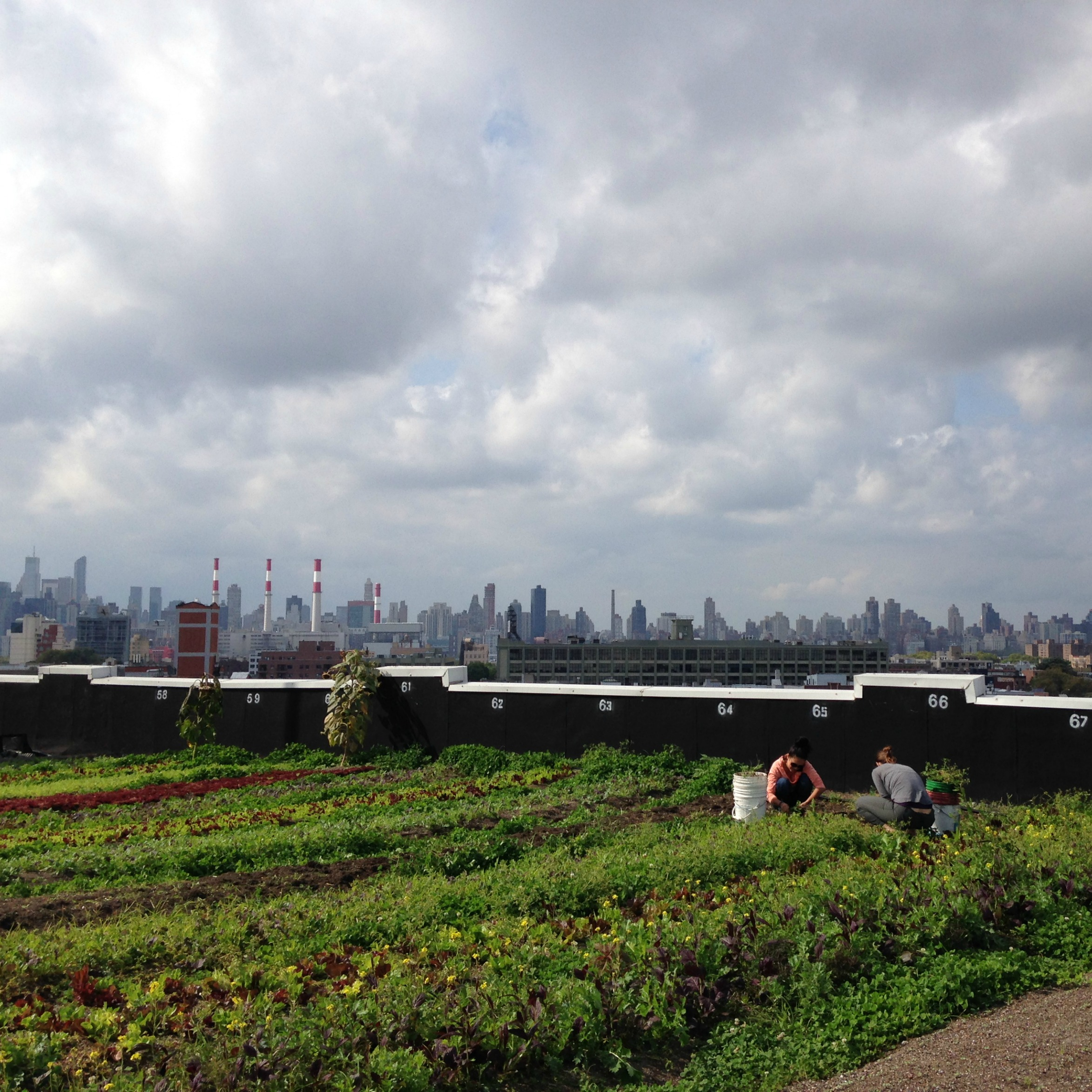 Rooftop garden in New York City