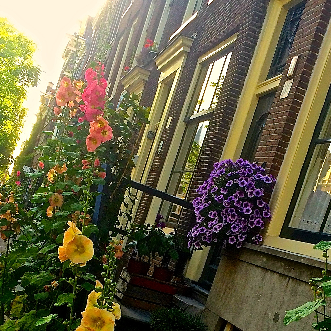 flowers in the street in amsterdam