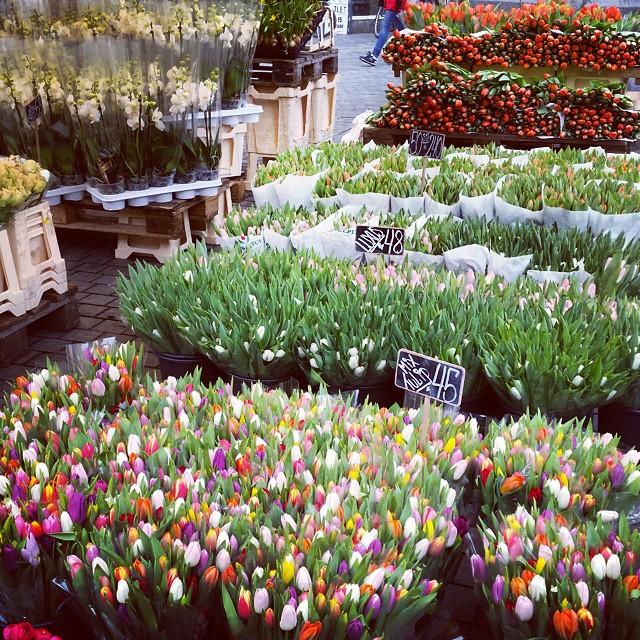 tulips in copenhagen