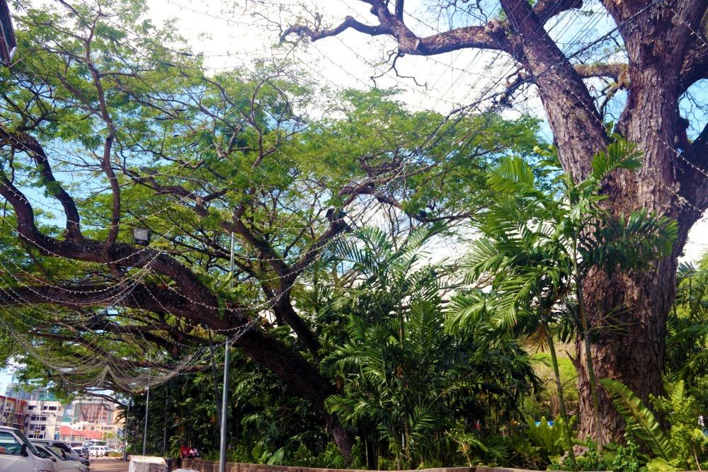 Greenery in Kota Kinabalu