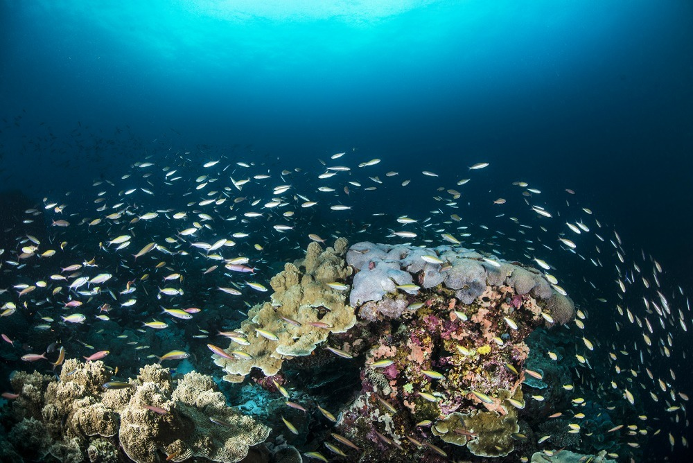 coral and fish underwater in the Maldives
