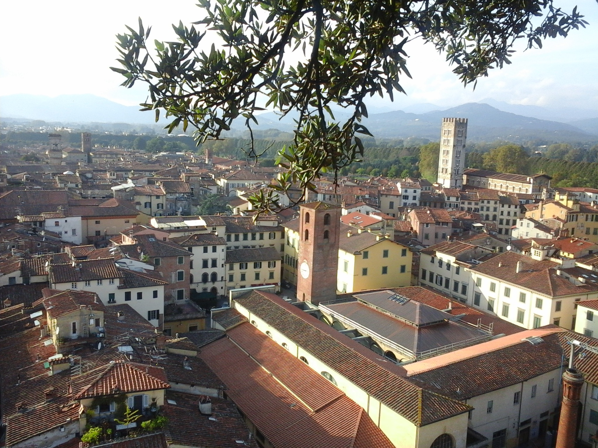 overlooking the rooftops of Lucca