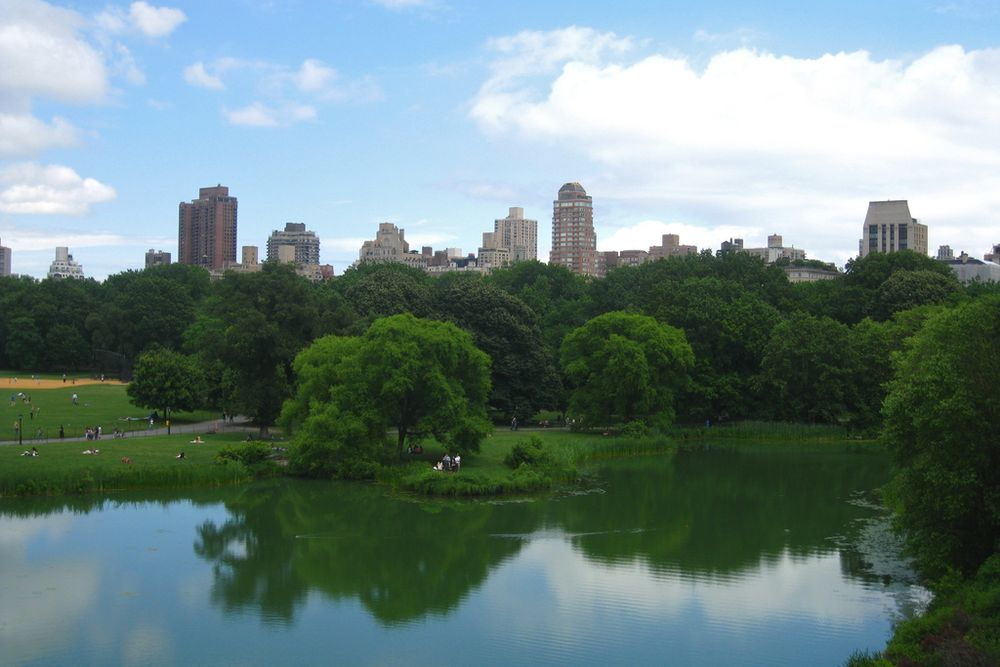 pond in Central Park with buildings in the background