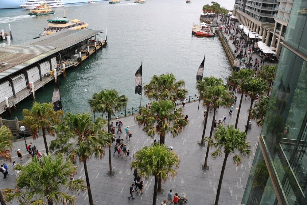 palm trees along the harbour in Sydney