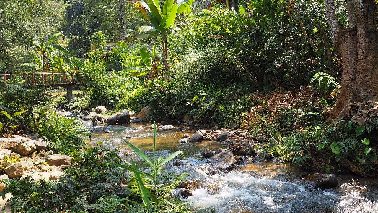 Mae Kampong near Chiang Mai