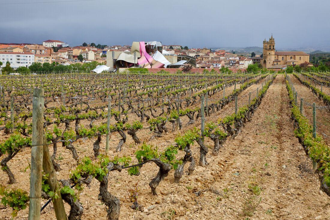 Vineyards of Rioja